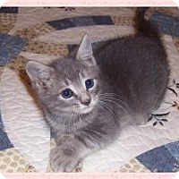 Adopt A Pet :: Kennedy - South Plainfield, NJ