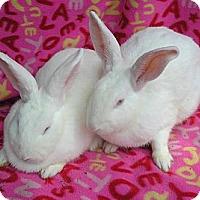 Adopt A Pet :: Tia & Maria - Williston, FL