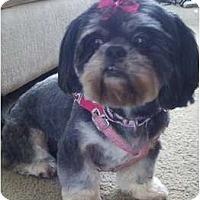 Adopt A Pet :: Mitzie-SC - Clemson, SC