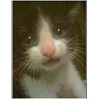Adopt A Pet :: Chubby - Owasso, OK