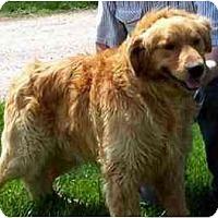 Adopt A Pet :: Johnny Cash - Denver, CO