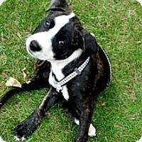 Adopt A Pet :: Levi - Woodbridge, CT