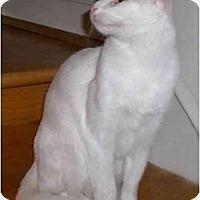Adopt A Pet :: Cici - Richmond, VA