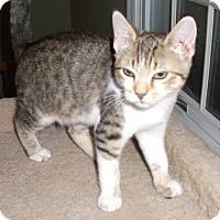Adopt A Pet :: Tyson - Colmar, PA