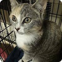 Adopt A Pet :: Dasha - Forest Hills, NY