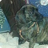 Adopt A Pet :: Revva - Alexandria, KY