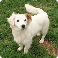 Adopt A Pet :: Bianca - Salem, NH