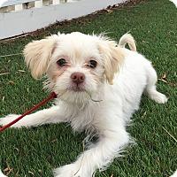 Adopt A Pet :: Jaina - Santa Ana, CA
