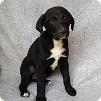 Adopt A Pet :: Triscuit - San Antonio, TX