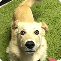 Adopt A Pet :: Paisley - Independence, MO