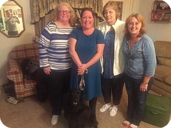 Flat-Coated Retriever Mix Dog for adoption in Northville, Michigan - zFinnegan - ADOPTED