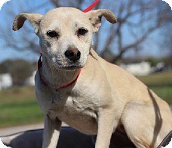 Labrador Retriever Mix Dog for adoption in Von Ormy, Texas - Rosie