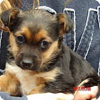 Adopt A Pet :: Presley (3 lb) VIdeo! - West Sand Lake, NY