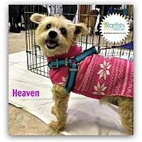 Adopt A Pet :: Heaven - Plainfield, IL