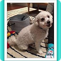 Adopt A Pet :: Pending!!Ziggy - IL - Tulsa, OK