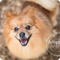 Adopt A Pet :: Billy - Myersville, MD