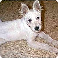 Adopt A Pet :: SCOTTY - dewey, AZ
