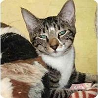 Adopt A Pet :: Taeya - Fort Lauderdale, FL