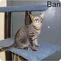 Adopt A Pet :: Bandit - Milwaukee, WI