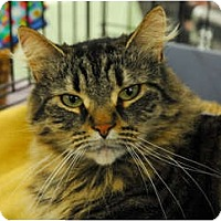 Adopt A Pet :: Ashton - Lunenburg, MA