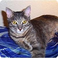 Adopt A Pet :: Charissa - Nolensville, TN