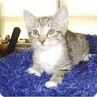 Adopt A Pet :: Butter Finger - Colmar, PA