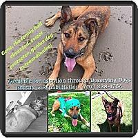 Adopt A Pet :: Gene - Santa Barbara, CA