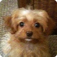 Adopt A Pet :: *Abby - PENDING - Westport, CT