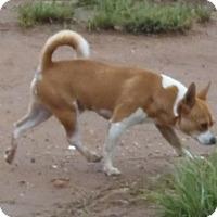 Adopt A Pet :: Dunn - Post, TX
