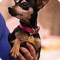 Adopt A Pet :: Megan Arlene - Syracuse, NY