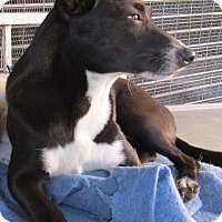 Adopt A Pet :: Heidi - San Ysidro, CA