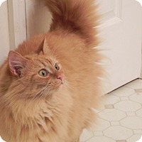 Adopt A Pet :: Melissa (Missy) - Fayetteville, TN