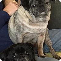 Adopt A Pet :: Loki & Chumley - Grand Rapids, MI