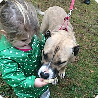 Adopt A Pet :: Holly - Bloomfield, CT