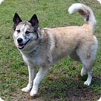 Adopt A Pet :: Savanah - Burbank, OH