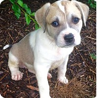 Adopt A Pet :: Corunna - Thompson's Station, TN