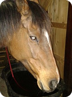 Thoroughbred Mix for adoption in Chadds Ford, Pennsylvania - Candyland Say a Few Syllables