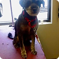 Adopt A Pet :: Scotch - Christiana, TN