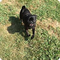 Adopt A Pet :: Truman-RBF - Spring Valley, NY