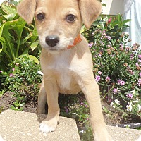 Adopt A Pet :: Kadina - West Chicago, IL