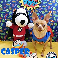 Chihuahua Mix Dog for adoption in Arcadia, Florida - Casper