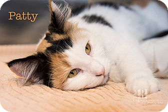 Calico Cat for adoption in San Juan Capistrano, California - Patty