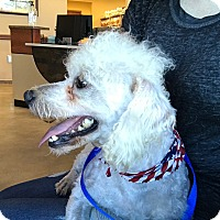 Adopt A Pet :: Roger - Austin, TX