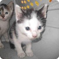 Adopt A Pet :: SCOOTER - Jacksonville, FL
