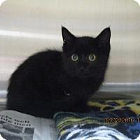 Adopt A Pet :: Edgar - Alvin, TX