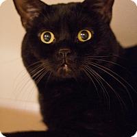Adopt A Pet :: Pretty Boy - Grayslake, IL