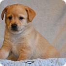 Adopt A Pet :: Elroy