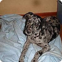 Adopt A Pet :: Zeplin - Destrehan, LA