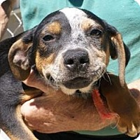 Adopt A Pet :: Melvin - Oakland, AR