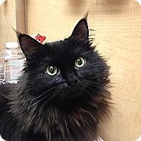 Adopt A Pet :: Sasha - Foothill Ranch, CA